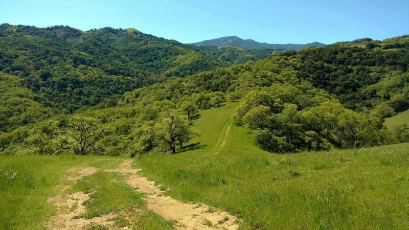 Loma Prieta, the highest of the Santa Cruz Mountains, is in the distance as Vista del Oro Trail drops down.