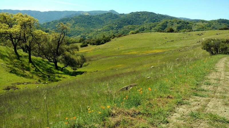 Lisa Killough Trail travels through fields of spring wildflowers with the Santa Cruz Mountains and Mt. Umunhum in the distance.
