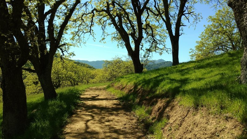 Mt. Umunhum of the Santa Cruz Mountains is in the distance as Lisa Killough Trail emerges from a shaded section.