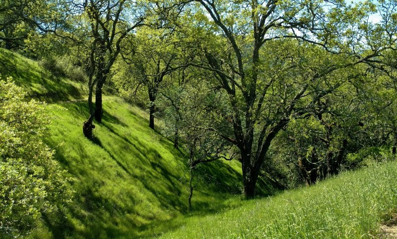 Beautiful spring greenery is everywhere in a shaded section of Lisa Killough Trail.