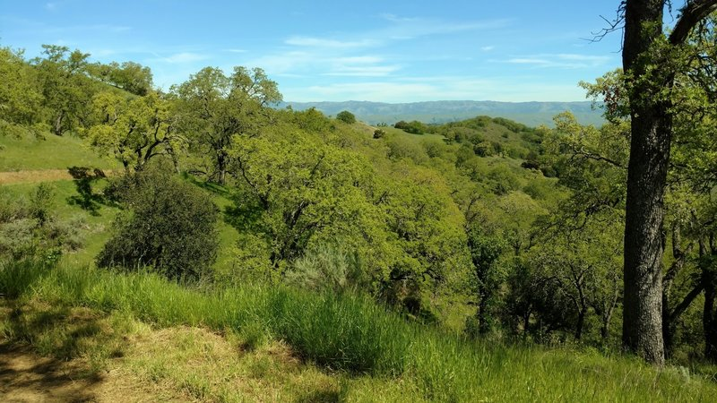 The Diablo Range can be seen in the distance to the northeast from Lisa Killough Trail.