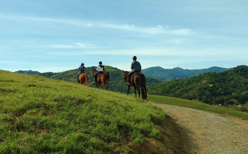 Horsies enjoying North Ridge Trail, its grass hills, and Santa Cruz Mountains in the distance.