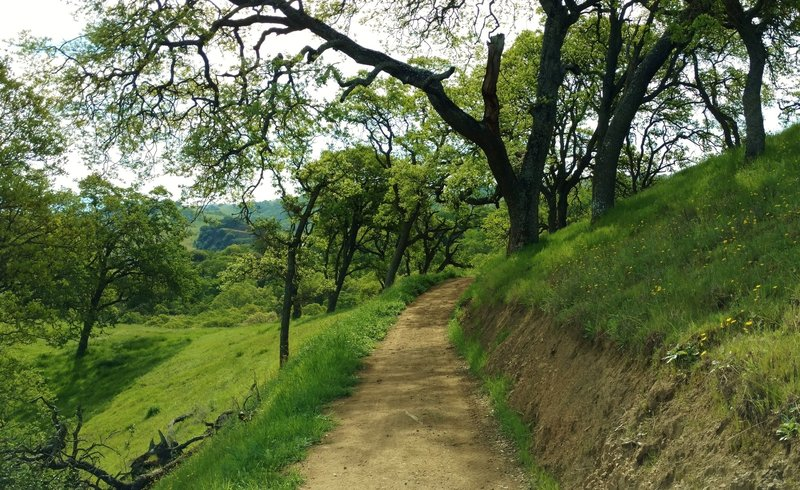 Cottle Trail meanders along a shaded grass hillside on its way to Calero Reservoir.