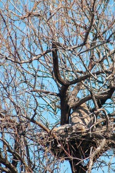 Owl Nest from 2016