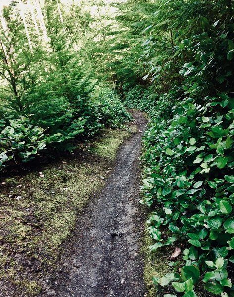 Roy Evans Trail