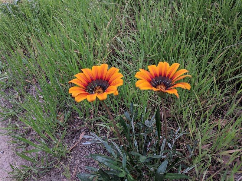 Beautiful wildflower!