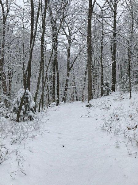Late season snow in Mohegan Park
