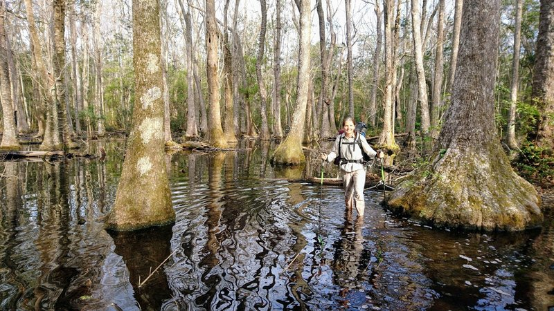 At the heart of the old swamp forest of Bradwell Bay Wilderness