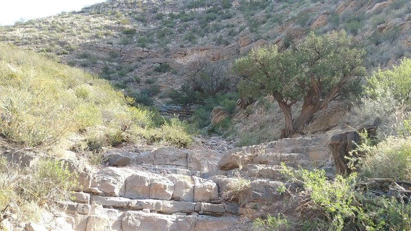 Heading down the arroyo, note the old juniper trees.