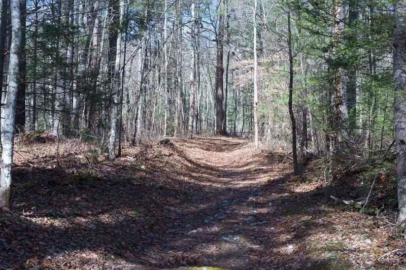 The Gold Mine Trail as it climbs through the woods away from the Cooper Road Trail.