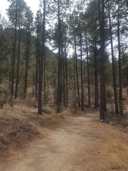 Beginning of Trail #33