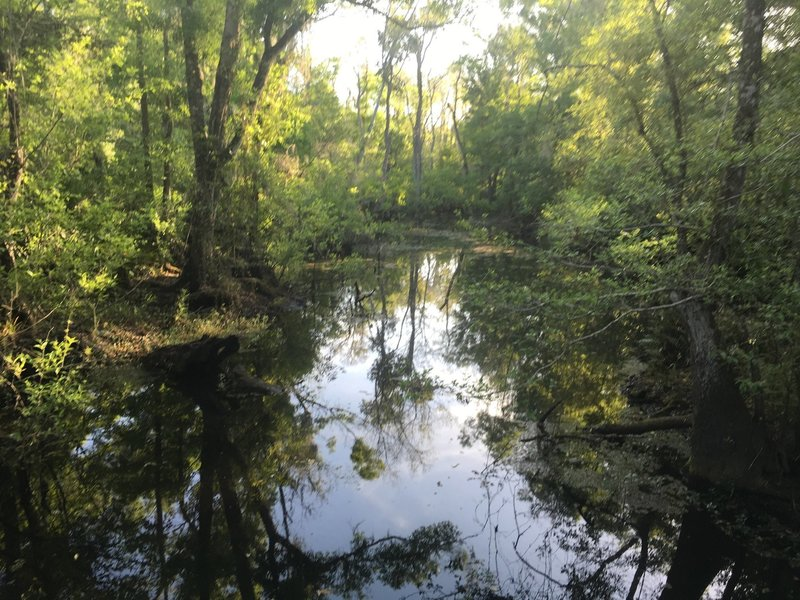 Brooker Creek
