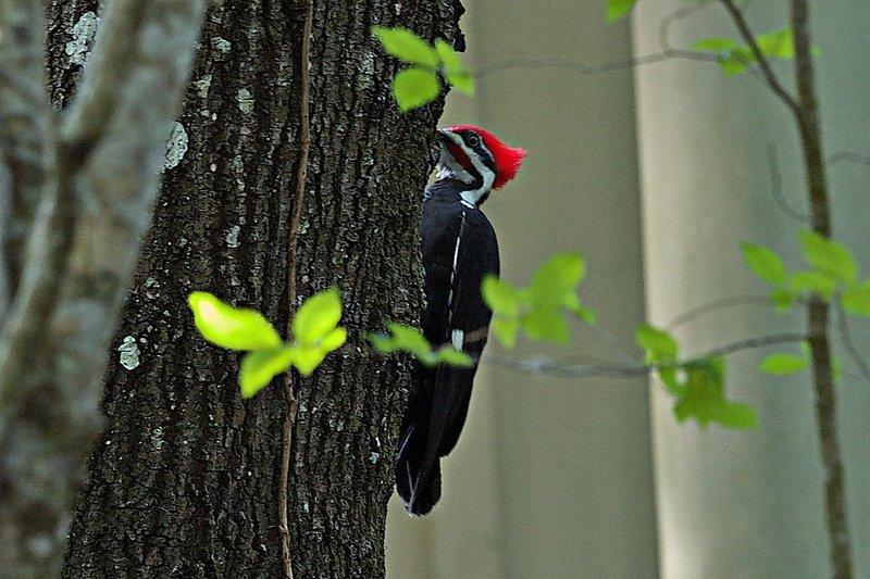 woodpecker Ed Center Trail