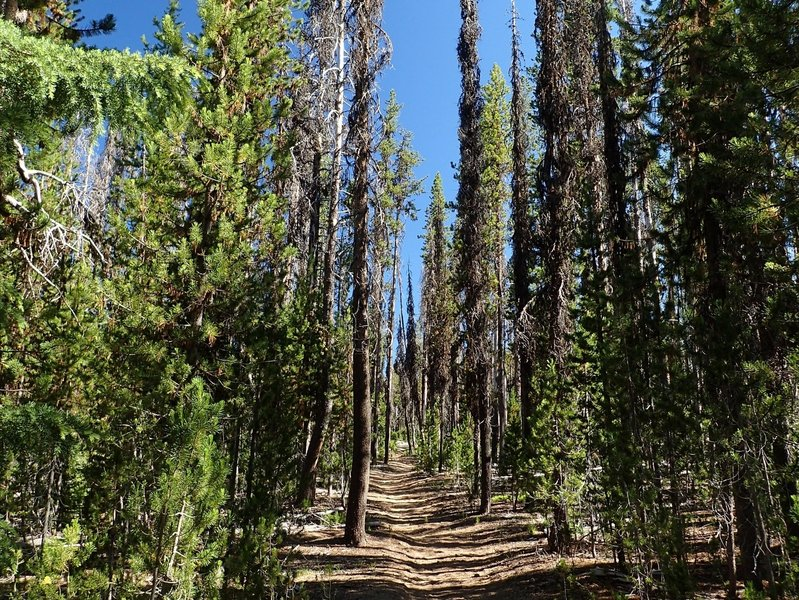 Starting along the Spruce Ridge Trail.
