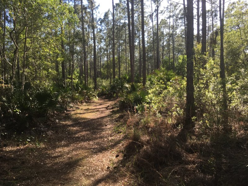 Its named pine needles path for a reason