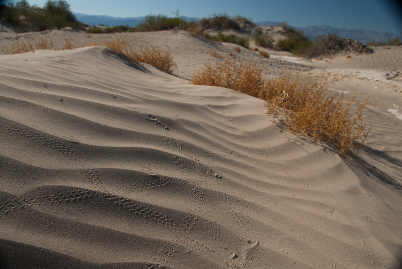 On a still day you'll be able to observe animal tracks all over the sand dunes!