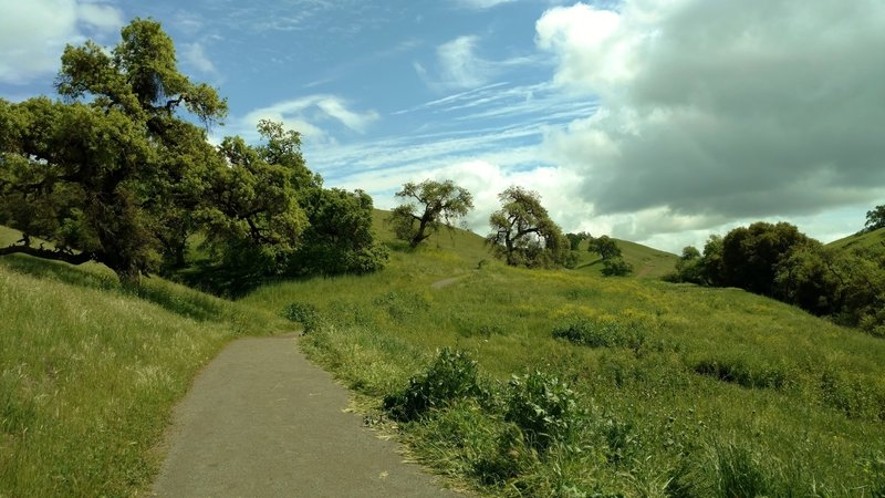 Willow Springs Trail heads into the oak-studded grass hills of Coyote Lake - Harvey Bear Ranch County Park.