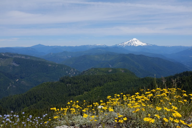View of Mt Jefferson from Elephant Rock