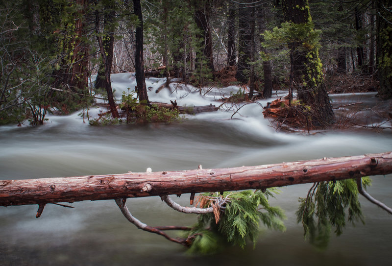 Flooded forest after significant warm rainfall, below the Cascade Viewpoint and above Highway 50