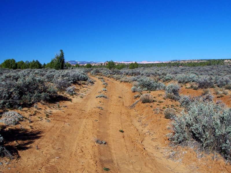 Along the old ranch road across the plateau