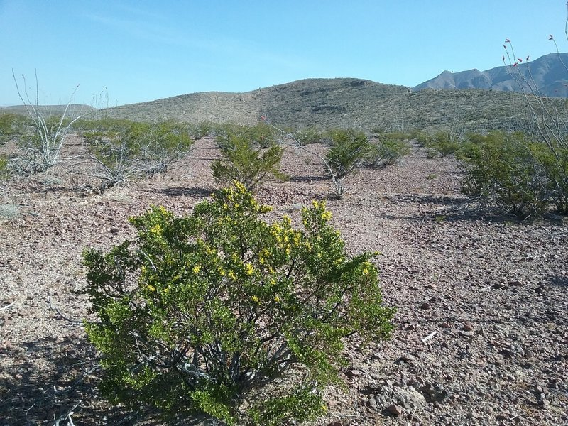 View of Granola Bowl with creosote bush.