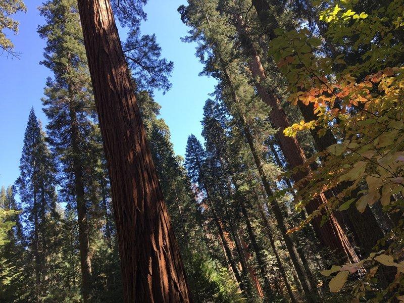Autumn at the Sequoias