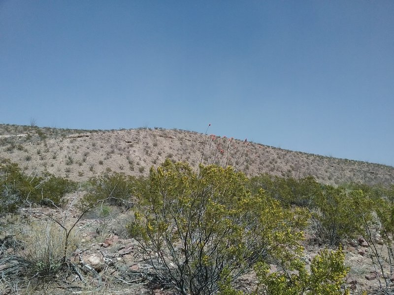 View from Lost Dog Trail.