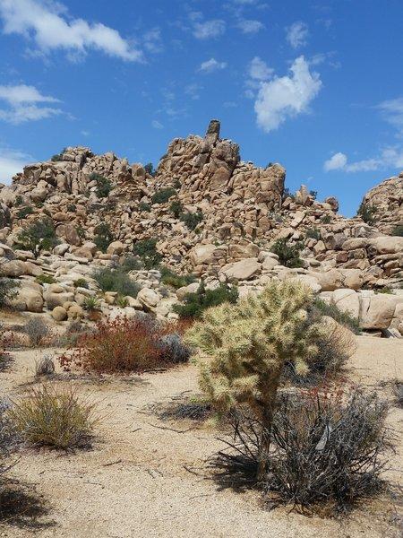 Hidden Valley vegetation