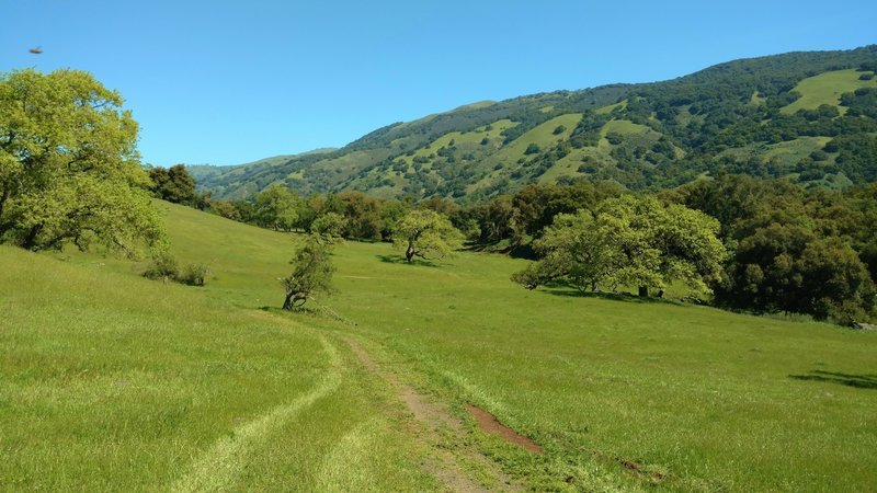 Coyote Ridge Trail meanders through a grass meadow with Palassou Ridge in the distance. Palassou Ridge forms the east side of the valley that holds Coyote Lake.