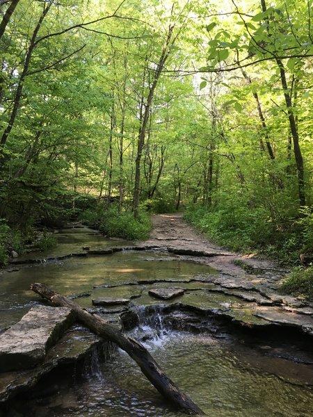 Creek Crossing at the Siebenthaler