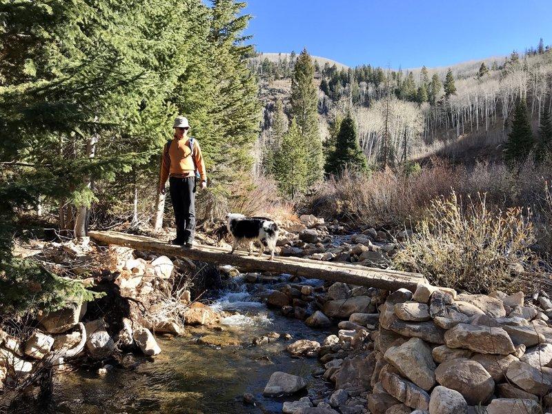 Shingle lake trail