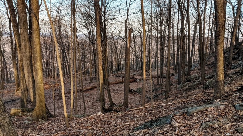 Early morning on the Appalachian Trail in Harriman State Park, NU