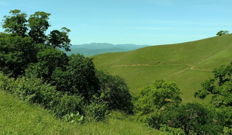 The hills in April of Coyote Lake - Harvey Bear Ranch County Park, with the Santa Cruz Mountains in the distance, seen from Mummy Mountain Trail.