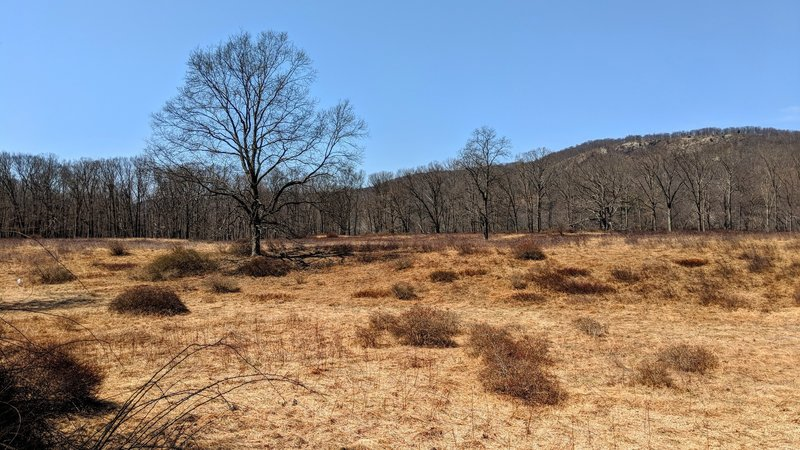 An early spring view of the grassland near Elk Pen parking entices one to plan an Autumn return.