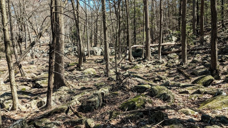 "A small section of the ""Valley of the Boulders"" in Harriman State Park."