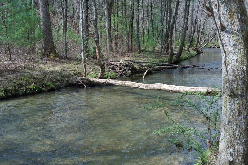 A tree crosses Abrams Creek. Unless you want to cross the creek on the log, you either have to wade or take an alternate route to the access trail from the Elijah Oliver Cabin.