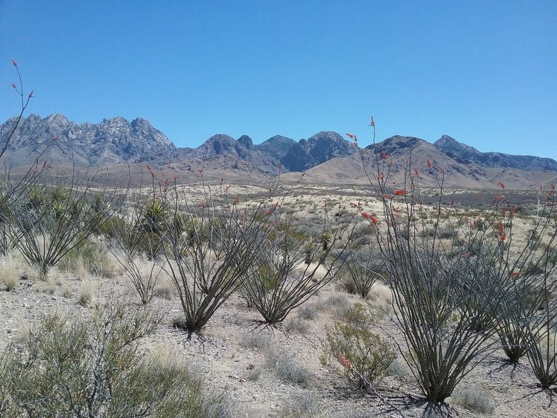 Looking SE towards the Organ Mountains