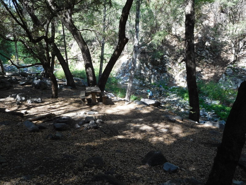 Shady West Fork Trail camp next to river.