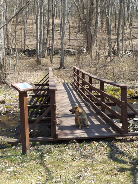 Two very nice wooden bridges (dog not included)