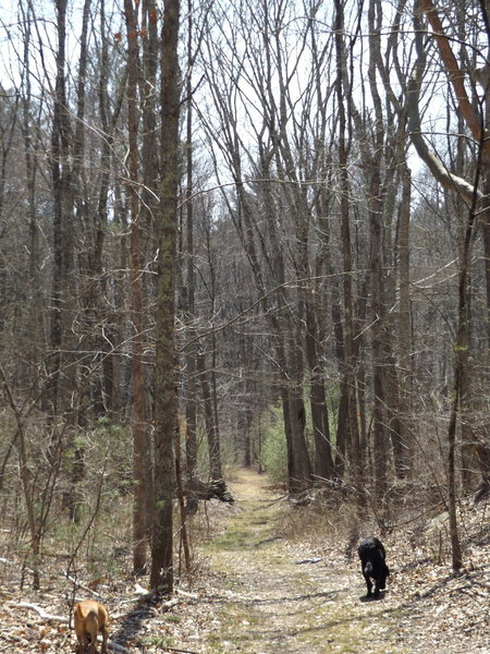 Trails are nice and wide, roots and rocks, but good everyone even for the family pet!