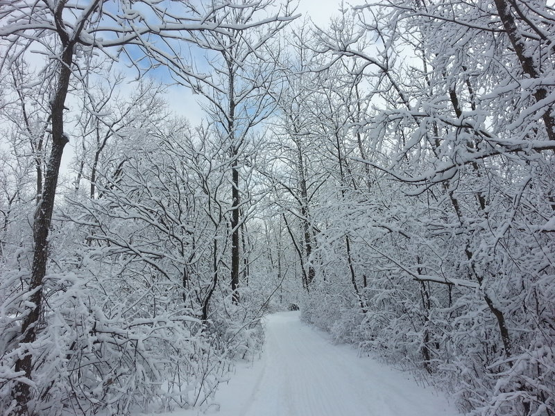 Hollows Conservation Area in the winter - Photo courtesy of McHenry County Conservation District