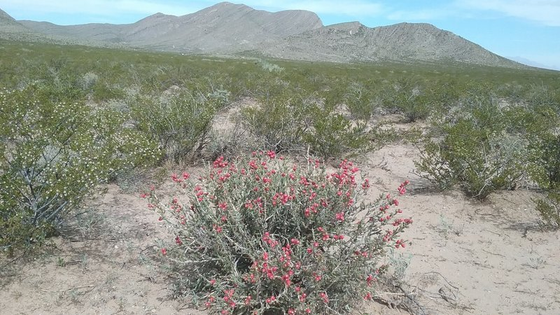 View of Anthony's Nose and Christmas cholla