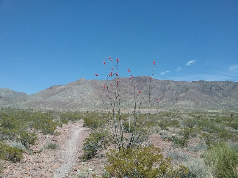 Looking east from the trail and the Franklin Mountains