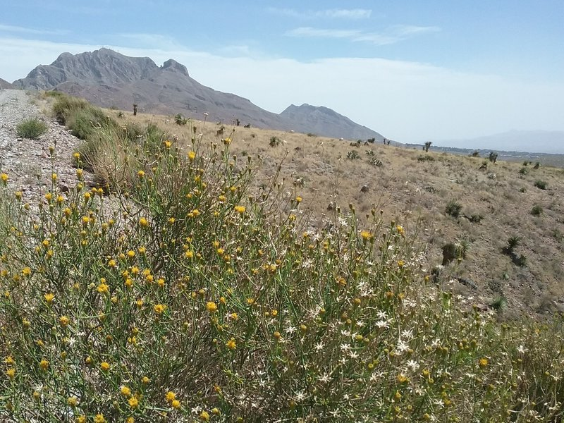 View of  South Franklin Peak and poreleaf in bloom.