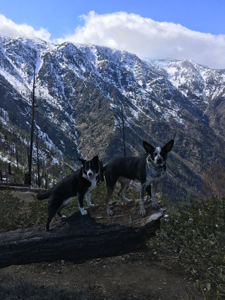 Hanging out along Icicle Ridge, enjoying the view