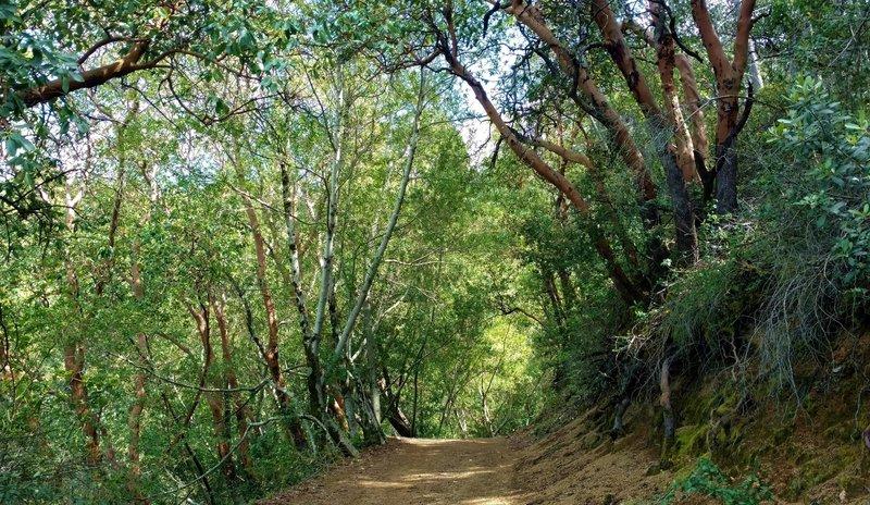 Sunlit woods along Alec Canyon Trail.