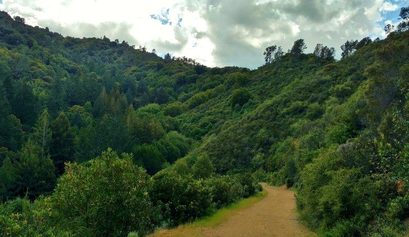 Alec Canyon Trail heads into a deep creek valley in the Santa Cruz Mountains of Uvas Canyon County Park.