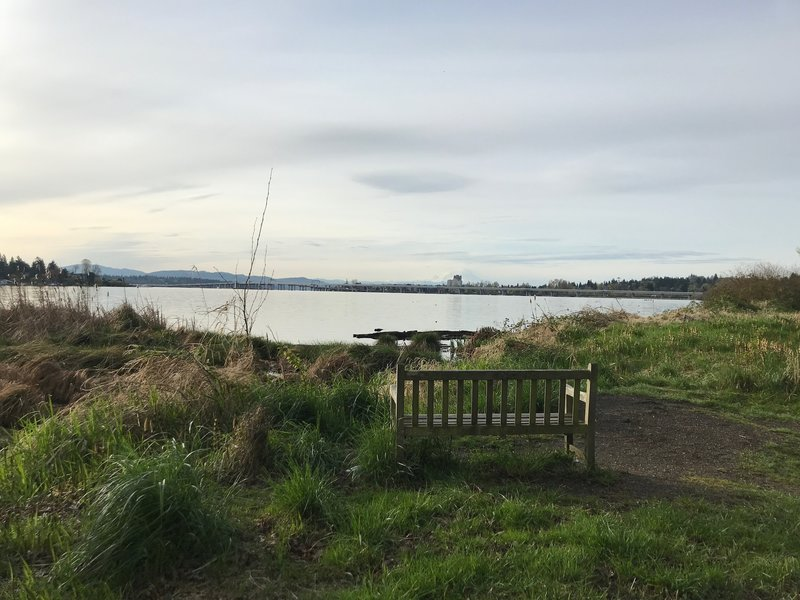 A bench with a view across Union Bay towards Mt. Rainier.