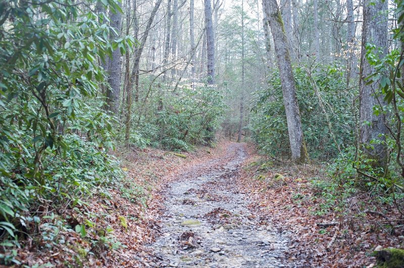 After rain storms, water can flow in the middle of the trail, which is common in the creek and river valleys of the Smokies.