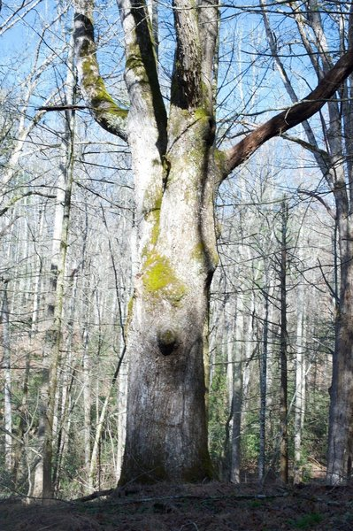 Some old trees can be seen along the trail.